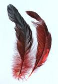 Plume de queue de coq teinte 8 à 15 cm x2