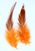 Plume de croupe de coq teinte 10 à 13 cm x2