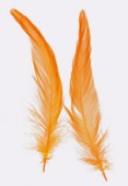 Plume de queue de coq orange 10/15 cm x2